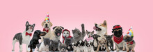 Lovely Team Of Cats And Dogs P...