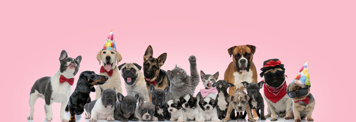Large group of cat and dogs posing wearing birthday hats
