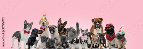 fototapeta na drzwi i meble Large group of cat and dogs posing wearing birthday hats