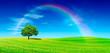 Leinwandbild Motiv Idyll, panoramic view, lonely tree with rainbow on green field
