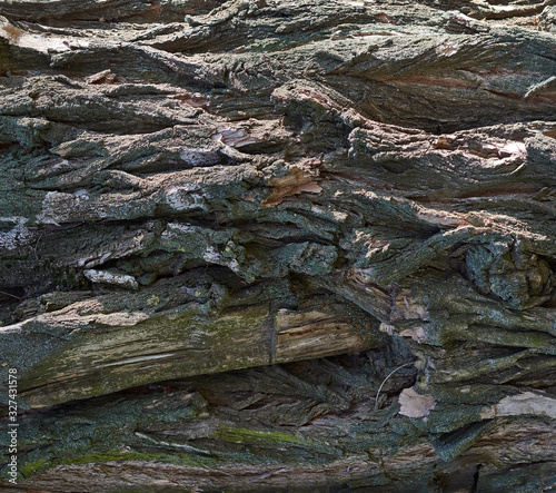 Photo gray texture of acacia tree bark, full frame