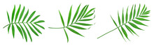 Green Leaves Of Palm Tree Isolated On White Background With Clipping Path. Set Or Collection