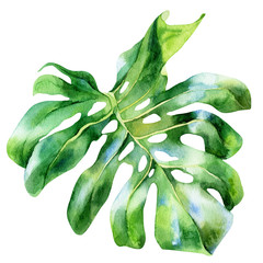 Panel Szklany Do jadalni Tropical leaf monstera on an isolated background, watercolor painting, botanical illustration, floral design, stock illustration.