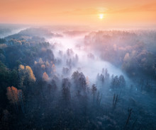 Aerial View Of Foggy Forest An...
