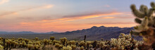 Cholla Cactus Garden Sunset In...