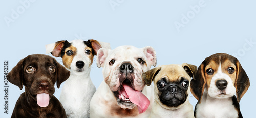 Obraz Group portrait of adorable puppies - fototapety do salonu