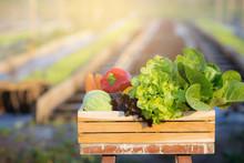 Fresh Organic Raw Vegetable An...