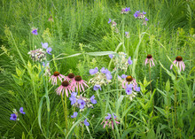 Spiderwort And Pale Purple Coneflower Mix Together In A Natural Pink And Blue Wildflower Bouquet.