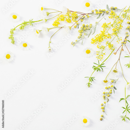 wildflowers on white paper background Wall mural