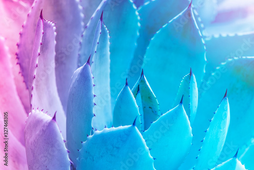 Sharp pointed agave plant leaves Canvas Print