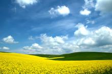 Rapeseed Meadows , Spring Sky ...