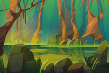 Swamp In Tropical Forest, Fairy Landscape With Marsh, Trees Trunks, Bog Grass And Rocks. Vector Cartoon Illustration Of Wild Jungle, Rain Forest With River Or Swamp