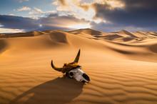 Skull Bull In The Sand Desert ...