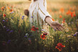 Leinwandbild Motiv Woman in rustic dress gathering  poppy and wildflowers in sunset light, walking in summer meadow. Atmospheric authentic moment. Copy space. Hand picking up flowers in countryside. Rural slow life