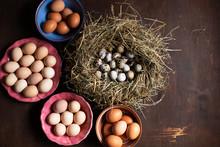 Preparing For Easter. Quail A...