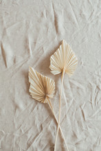 Tan Fan Craft Leaves On Beige Washed Linen Cloth. Flat Lay, Top View Minimal Floral Concept.