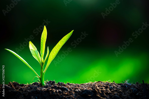 The Sapling are growing from the soil with sunlight , nature new born and environmental concept