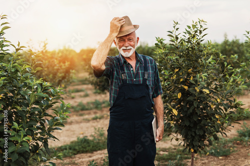 Fotografia Sixty years old beard agronomist inspecting trees in orchard and using tablet computer