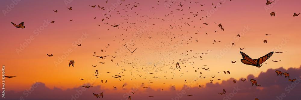 Fototapeta swarm of monarch butterflies, Danaus plexippus group during sunset