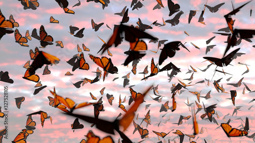 swarm of monarch butterflies, Danaus plexippus group during sunset Wallpaper Mural