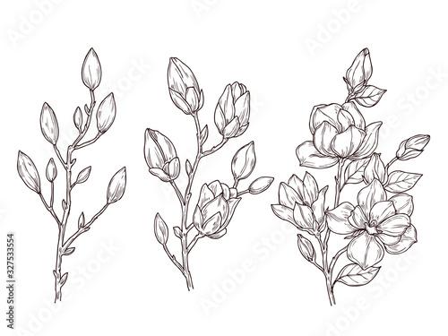 Cuadros en Lienzo Magnolia sketch