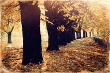 Beautiful Autumn Park, Chestnut Autumn Alley, Old Photo Effect.