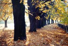 Beautiful Autumn Park, Chestnu...