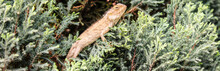 A Picture Of Lizard