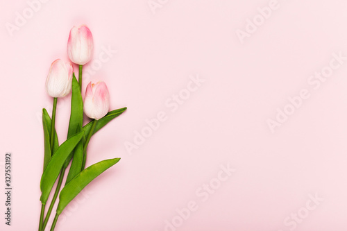 Fototapeta Copy-space blooming tulips on pink background