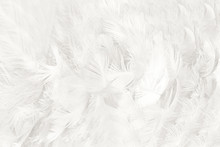 Beautiful White Feather Wooly ...