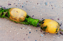 Abandoned Beach Buoy With Algae On The Sand