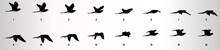 Bird Flying Animation Sequence...