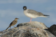 Small And Large Bird On A Rock