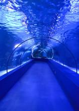 Underwater Glass Transparent Tunnel Arch In The Aquarium In Blue Tones