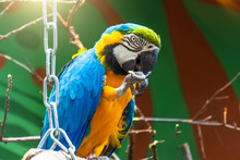 A Blue Macaw Parrot Sits On A ...