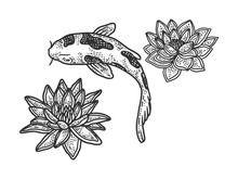 Koi Carp And Water Lily Sketch...