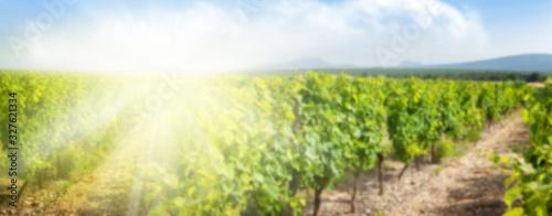 Canvastavla Blurred backdrop with sunny landscape of vineyard