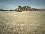 Fototapeta Sawanna - View of the savannah