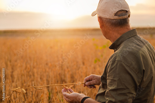 Foto Portrait of senior farmer standing in soybean field examining crop at sunset