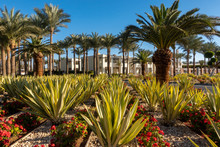 Botanical Garden With Exotic Plants In Middle East. Palm Trees, Green Agave And Blooming Red Flowers. Well Maintained Park In Resort City In Summer Sunny Day. Plants And Nature Of Egypt.