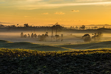 A Beautiful Golden Sunrise With Sun Touching Frost Grass In Rural Waikato, New Zealand.