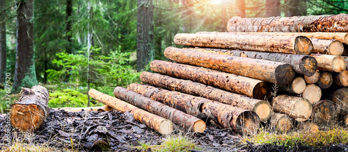 Log trunks pile, the logging timber forest wood industry Tableau sur Toile