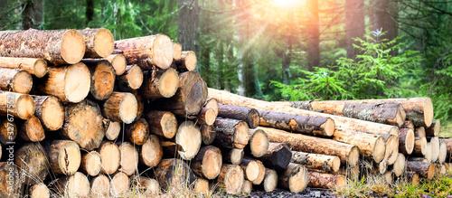 Fototapeta Log trunks pile, the logging timber forest wood industry. Wide banner or panorama wooden trunks obraz