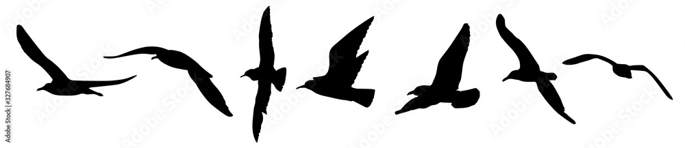 Fototapeta A seagulls silhouette