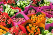 Multicolored Kalanchoe Flowers...