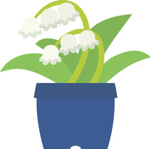 Potted Lily Of The Valley On ...