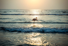 Flamingos On The Ocean In The ...