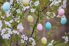 Some Colourful Easter Eggs Hanging At Branches Of Cherry. Close Up