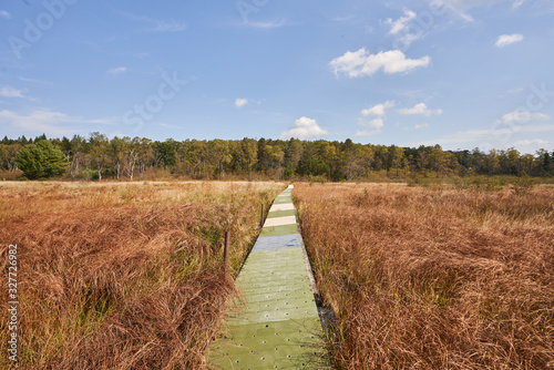 A floating boardwalk at Beaver Meadows in Allegheny National Forest Wallpaper Mural