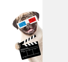 Pug Puppy Wearing 3d Glasses H...